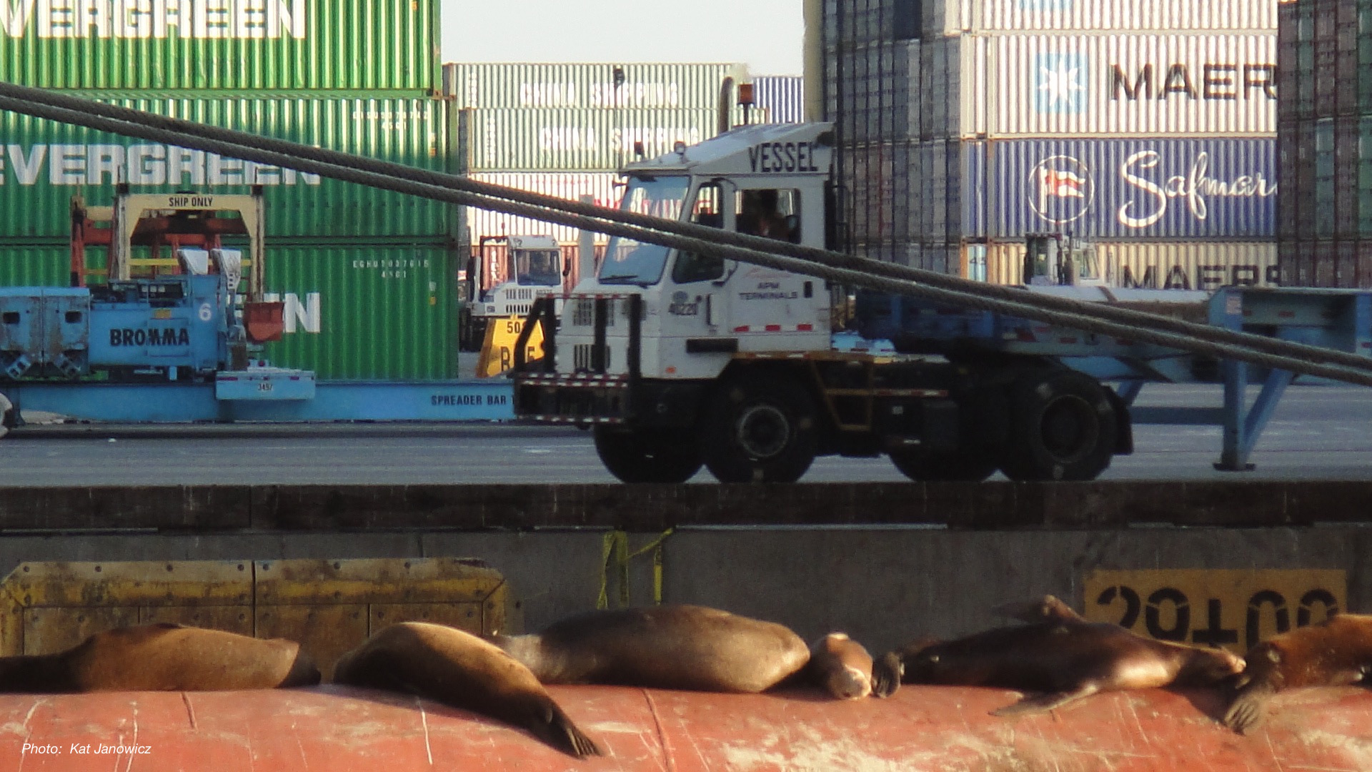 Seals at the Port of Los Angeles